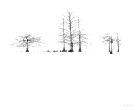 Black and White minimalistic scene of trees in a lake