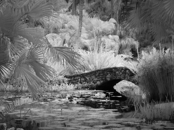 Old Coral Bridge IR