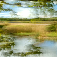 Painterly view of the wetlands